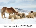 Herd Of Sheep Skudde And Horse...