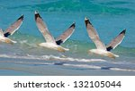 three seagulls flying over the... | Shutterstock . vector #132105044