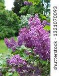 botanical garden of kharkiv ... | Shutterstock . vector #1321070093