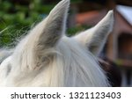 closeup of a white horse's mane ... | Shutterstock . vector #1321123403