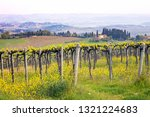 vineyards in the hills of... | Shutterstock . vector #1321224683