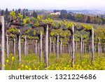 vineyards in the hills of... | Shutterstock . vector #1321224686