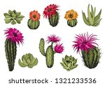 Vector Set Of Green Succulent...