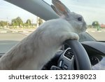 Stock photo white easter bunny rides to give gifts rabbit in the car at the driver s seat behind the steering 1321398023