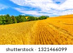wheal field agriculture... | Shutterstock . vector #1321466099