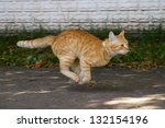 Stock photo red cat running down the street 132154196