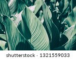 tropical palm leaf  striped... | Shutterstock . vector #1321559033