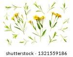 fresh sweet marigold flowers...   Shutterstock . vector #1321559186