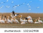 a group of pelicans in the...   Shutterstock . vector #132162908