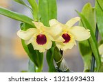 yellow imperial orchid branch... | Shutterstock . vector #1321693433