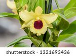 yellow imperial orchid branch... | Shutterstock . vector #1321693436