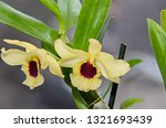 yellow imperial orchid branch... | Shutterstock . vector #1321693439