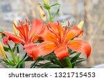 orange yellow lilies flowers ... | Shutterstock . vector #1321715453