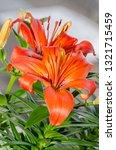 orange yellow lilies flowers ... | Shutterstock . vector #1321715459