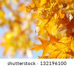 Autumn Leaves Background On...