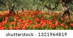 Vibrant Red Poppy Flowers Under ...