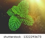 fresh green  leaf pepermint and ... | Shutterstock . vector #1322293673