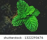 fresh green  leaf pepermint and ... | Shutterstock . vector #1322293676