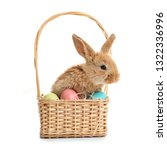 adorable furry easter bunny in... | Shutterstock . vector #1322336996