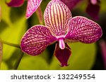 purple and white variegated... | Shutterstock . vector #132249554