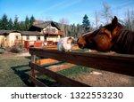 hamilton  montana  usa  deer...   Shutterstock . vector #1322553230