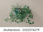 fresh spearmint vase in modern... | Shutterstock . vector #1322576279