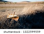 solitary hunting sign in a... | Shutterstock . vector #1322599559