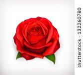 red rose vector   Shutterstock .eps vector #132260780