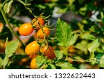 fresh ripe red tomatoes and the ... | Shutterstock . vector #1322622443