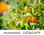 fresh ripe red tomatoes and the ... | Shutterstock . vector #1322622479