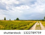 lueneburger heide in germany  | Shutterstock . vector #1322789759