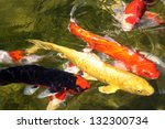 4 Koi Fish On The Surface ...