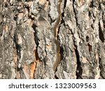 pine processionary marching in... | Shutterstock . vector #1323009563