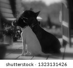 Stock photo  silhouette of a sitting dog 1323131426