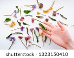 female hand keeping dried... | Shutterstock . vector #1323150410