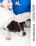 vet nurse injecting dog neck | Shutterstock . vector #132317339