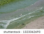 Algae Bloom On Lake Erie