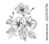 sketch of beautiful hibiscus... | Shutterstock .eps vector #1323374756