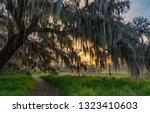 Mossy Tree At Sunrise
