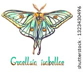graellsia isabellae  spanish...   Shutterstock . vector #1323430496