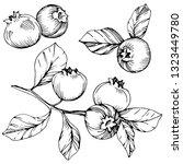 vector blueberry black and...   Shutterstock .eps vector #1323449780