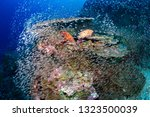 a beautiful tropical coral reef ... | Shutterstock . vector #1323500039