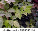 a beautiful pattern of...   Shutterstock . vector #1323538166