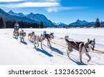 Wallgau - Germany, February 17: Participant of a dog sled race in front of the european alps on February 17, 2019 in Wallgau - stock photo