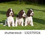 Portrait Of Nice Puppies  ...