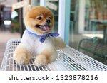 cute pomeranian dog happy smile ... | Shutterstock . vector #1323878216