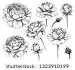 hand drawn set of rose flower...   Shutterstock . vector #1323910199