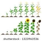 corn plant and sunflower plant...   Shutterstock .eps vector #1323963536