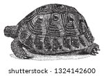 the land turtle  vintage... | Shutterstock .eps vector #1324142600