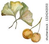 green red ginkgo biloba leaves. ... | Shutterstock . vector #1324242053